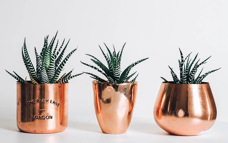 3つの植木鉢